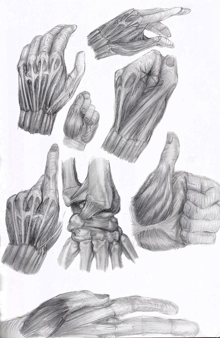 Croquis sur l 39 anatomie musculaire site professionnel - Dessin du coeur humain ...